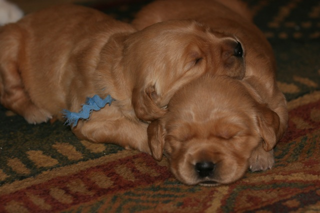 Willie and his brother Tucker at 2.5 weeks old, 2010