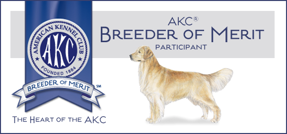 Golden Retriever breeder of merit AKC