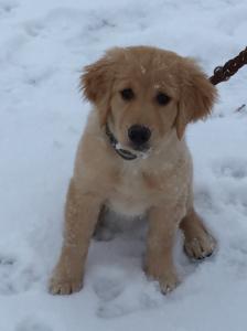 Lyric and first snow, near Pocatello, Idaho, December 2014