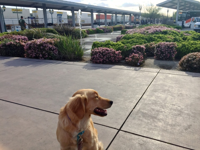 Lyric waiting for train at Bakersfield Amtrak station