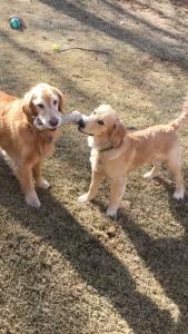 Rio and Cody