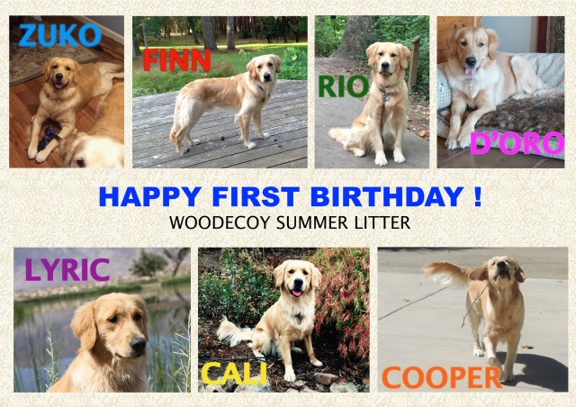 SUMMER LITTER 1ST BDAY
